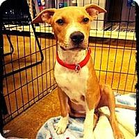 Adopt A Pet :: Daniel - Silsbee, TX