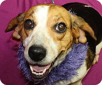 Beagle Mix Dog for adoption in Jackson, Michigan - Dolly