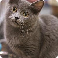Adopt A Pet :: Charlotte - Sacramento, CA