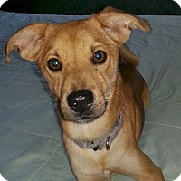 Adopt A Pet :: Leo - North Olmsted, OH