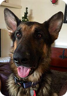 German Shepherd Dog Mix Dog for adoption in Phoenix, Arizona - Aries