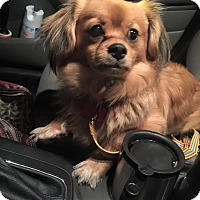 Adopt A Pet :: Jack - Portland, ME