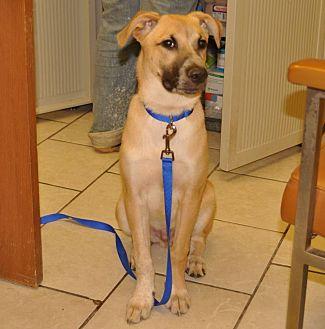 Anatolian Shepherd Mix Dog for adoption in Sunrise Beach, Missouri - Cannoli