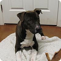 Adopt A Pet :: Gabe - South Dennis, MA