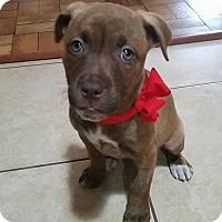 Adopt A Pet :: Hope - Gainesville, FL