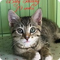 Adopt A Pet :: Harvey - Island Park, NY