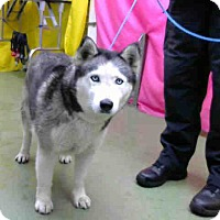 Adopt A Pet :: URGENT on 6/29@DEVORE San Bern - San Bernardino, CA