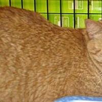 Adopt A Pet :: Tigra - Logan, UT