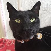 Adopt A Pet :: Rocky - Cumberland, ME