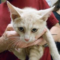Adopt A Pet :: Rick - Quincy, IL