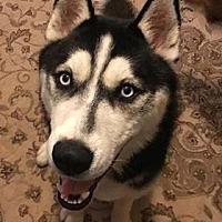 Adopt A Pet :: Luka - Roswell, GA