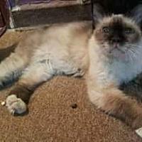 Adopt A Pet :: Cambria - Ennis, TX