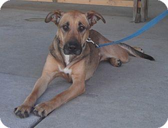 Shepherd (Unknown Type) Mix Dog for adoption in Wheaton, Illinois - Duchess