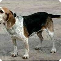 Adopt A Pet :: Mr Dudley - Phoenix, AZ