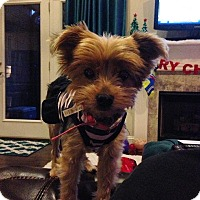 Adopt A Pet :: Maggie Mae - Southern Pines, NC