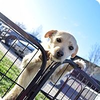 Adopt A Pet :: Mikey - Meridian, ID