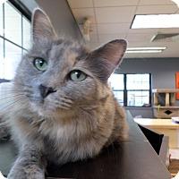 Adopt A Pet :: Curie - Lake Charles, LA