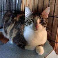 Adopt A Pet :: Midori - Monrovia, CA
