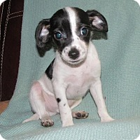 Adopt A Pet :: Quince - Ball Ground, GA