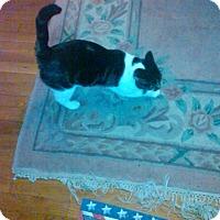 Adopt A Pet :: Peanut_Courtesy Post - Columbia, MD