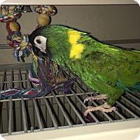 Adopt A Pet :: Channy - Punta Gorda, FL