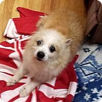 Adopt A Pet :: Vinnie/adopted - Eldora, IA