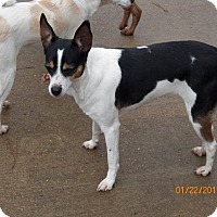 Adopt A Pet :: Allie - Boston, MA