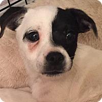 Adopt A Pet :: PH13#1M - Orlando, FL