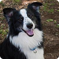 Adopt A Pet :: Zeus - Natchitoches, LA
