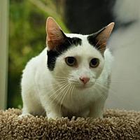 Adopt A Pet :: Henry - McKinney, TX