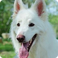 Adopt A Pet :: Winston - Wayland, MA