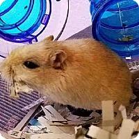 Adopt A Pet :: LOUISE - Peoria, IL