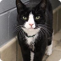 Adopt A Pet :: Milo - Bradenton, FL