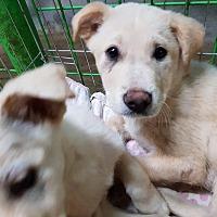 Adopt A Pet :: Ryder - los angeles, CA