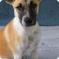 Adopt A Pet :: Izzo - Houston, TX