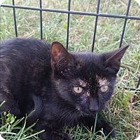 Adopt A Pet :: Misty - Monterey, VA