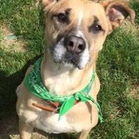 Adopt A Pet :: Chance - Peace Dale, RI