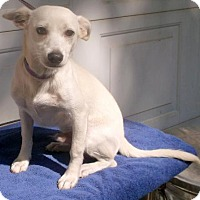 Adopt A Pet :: Rascal - Birch Tree, MO