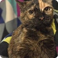 Adopt A Pet :: Tara - University Park, IL