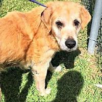 Adopt A Pet :: Hachi #0624 - Fort Worth, TX