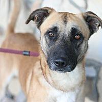 Adopt A Pet :: Bentley - Canoga Park, CA