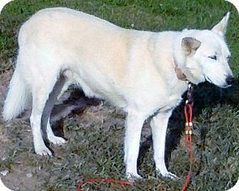 Husky/German Shepherd Dog Mix Dog for adoption in Cincinnati, Ohio - Sklylar