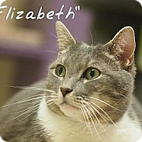 Adopt A Pet :: Elizabeth - Ocean City, NJ