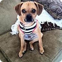 Adopt A Pet :: Slater - Justin, TX