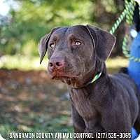 Adopt A Pet :: Chevy - Springfield, IL