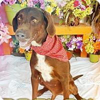 Adopt A Pet :: Boston - Odessa, TX