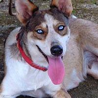 Adopt A Pet :: Blanca - Sterling Heights, MI