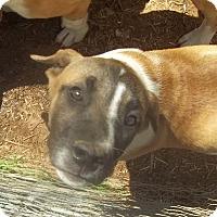 Adopt A Pet :: Einstein pending adoption - East Hartford, CT