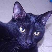 Adopt A Pet :: Night Talker - Holden, MO