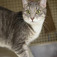 Adopt A Pet :: Dixon - Olive Branch, MS